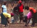 family-farming-1