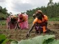 family-farming-3